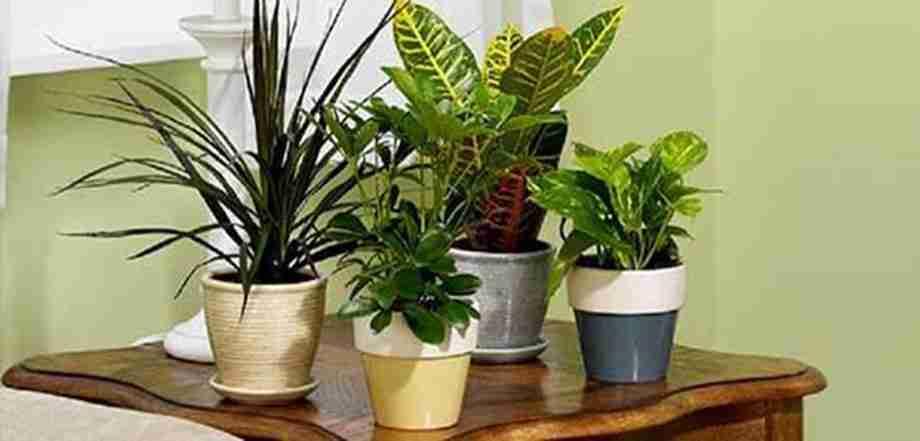 مراقبت از گیاهان آپارتمانی در هنگام مسافرت