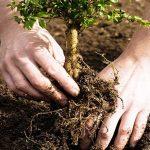 ۲۳ نکته کاشت نهال درختان میوه