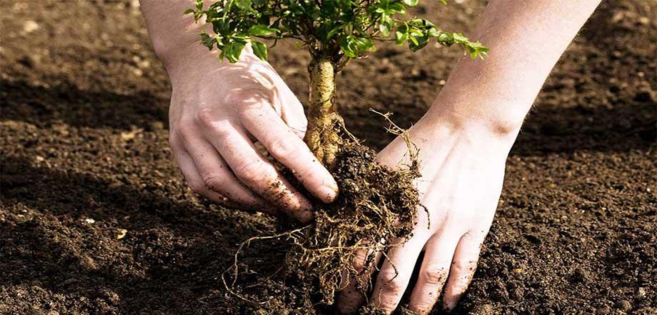 23 نکته کاشت نهال درختان میوه