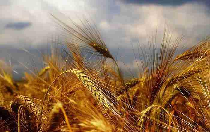 مهمترین راهکارهای افزایش تولیدات کشاورزی
