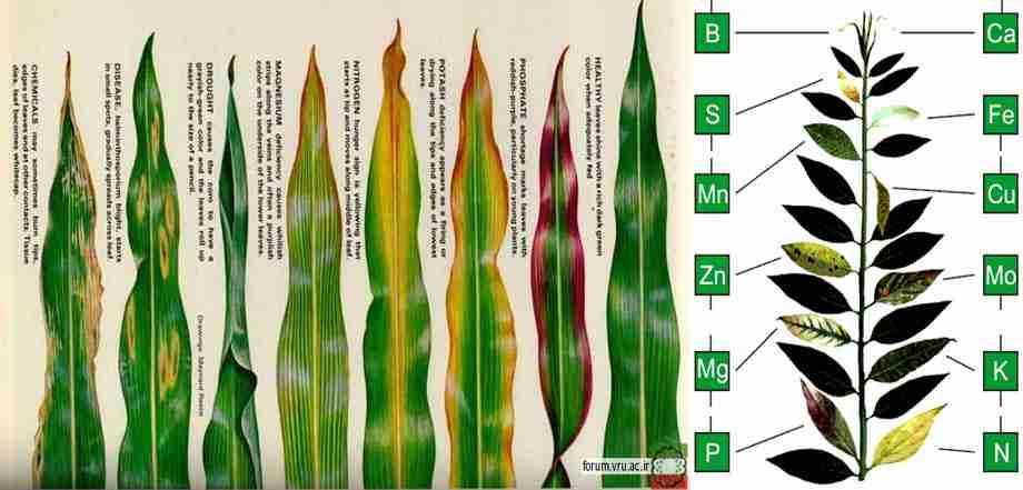 علائم کم و زیاد بودن عناصر غذایی در گیاه