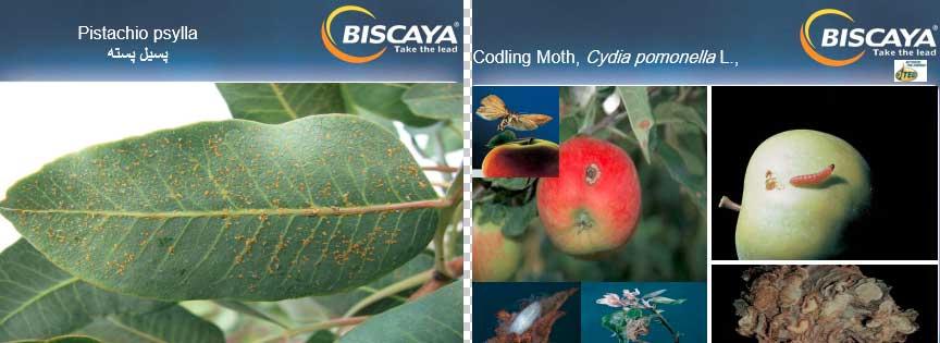 آفات کنترل شده توسط حشره کش بیسکایا