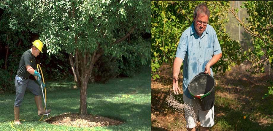 تغذیه درختان باغی در مناطق معتدل