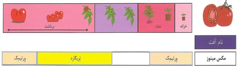 برنامه تناوبی استفاده از حشره کش تریگارد و ورتیمک