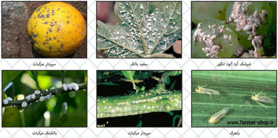 حشرات کنترل شده توسط آفت کش اپلاود