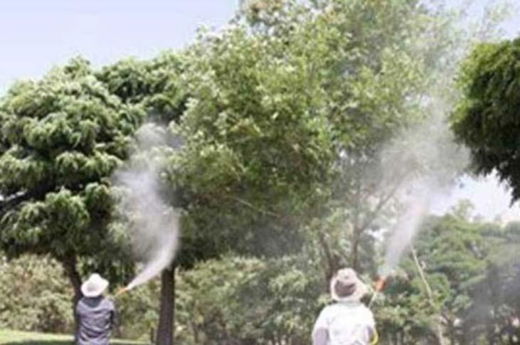 آبشویی درختان برای کاهش جمعیت سفید بالک