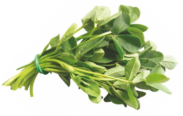 بذر شنبلیله یک کیلویی بذر طلایی رویان