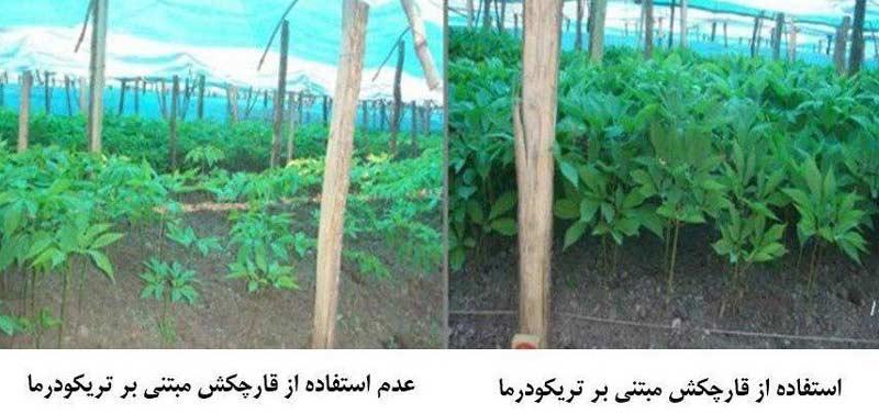 افزایش حلالیت عناصر غذایی در خاک برای گیاهان با استفاده از قارچکش Trichomix HV