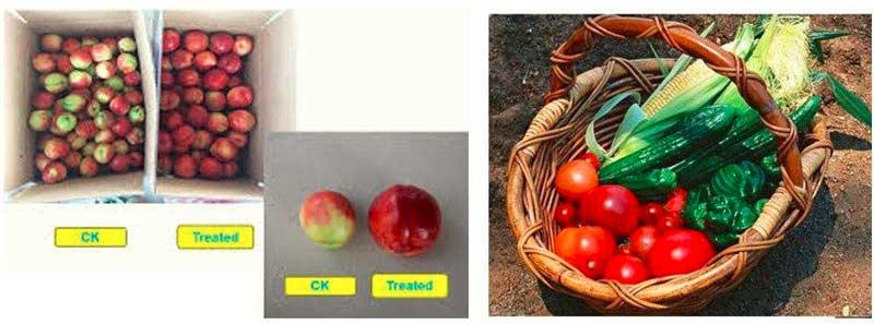 افزایش عملکرد و رنگ و طعم میوه با استفاده از قارچکش Trichomix HV