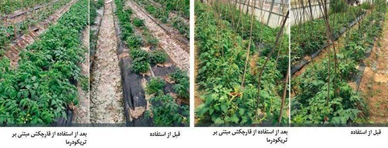 کاهش شوری خاک با استفاده از قارچ کشهای مبتنی بر قارچ تریکودرما هارزیانوم