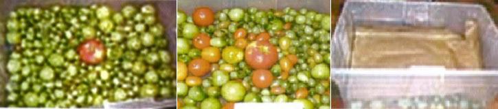 راههای رساندن گوجه فرنگی