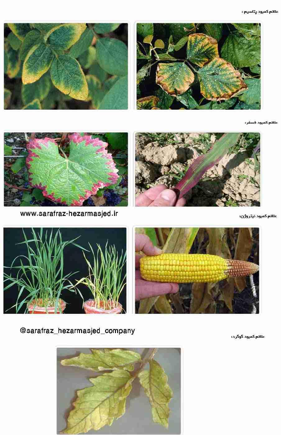 علایم کمبود نیتروژن ، فسفر ، پتاسیم و گوگرد در گیاهان