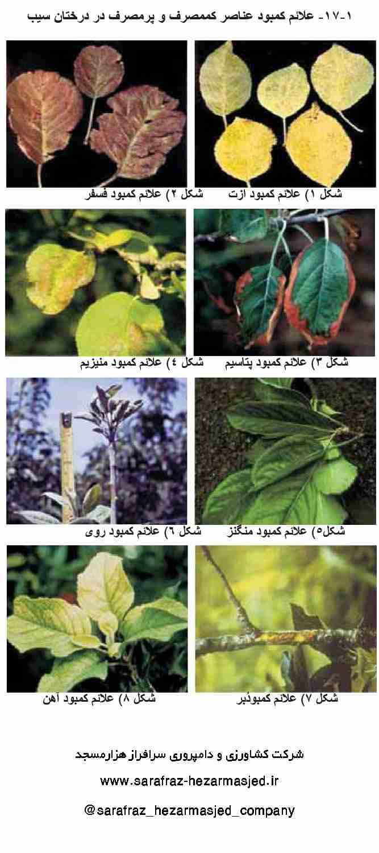 علایم کمبود عناصر در گیاهان