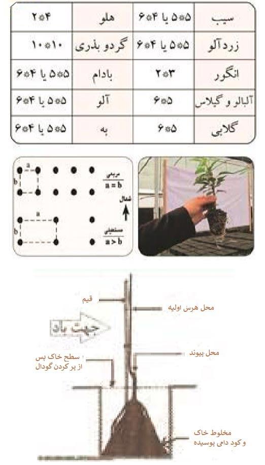 فواصل مناسب کاشت نهال ها در باغ