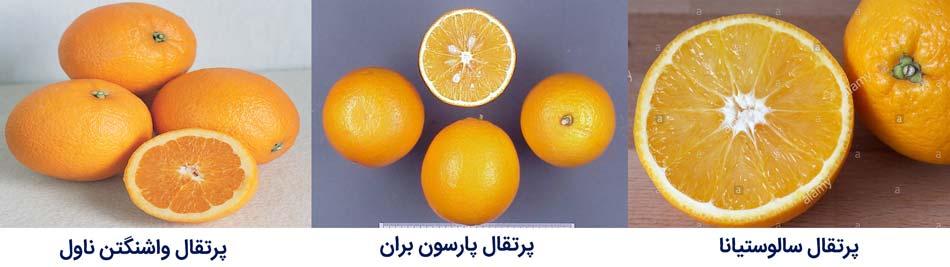 ارقام مرکبات پرتقال های واشنگتن ناول---پارسون براون و سالوستیانا